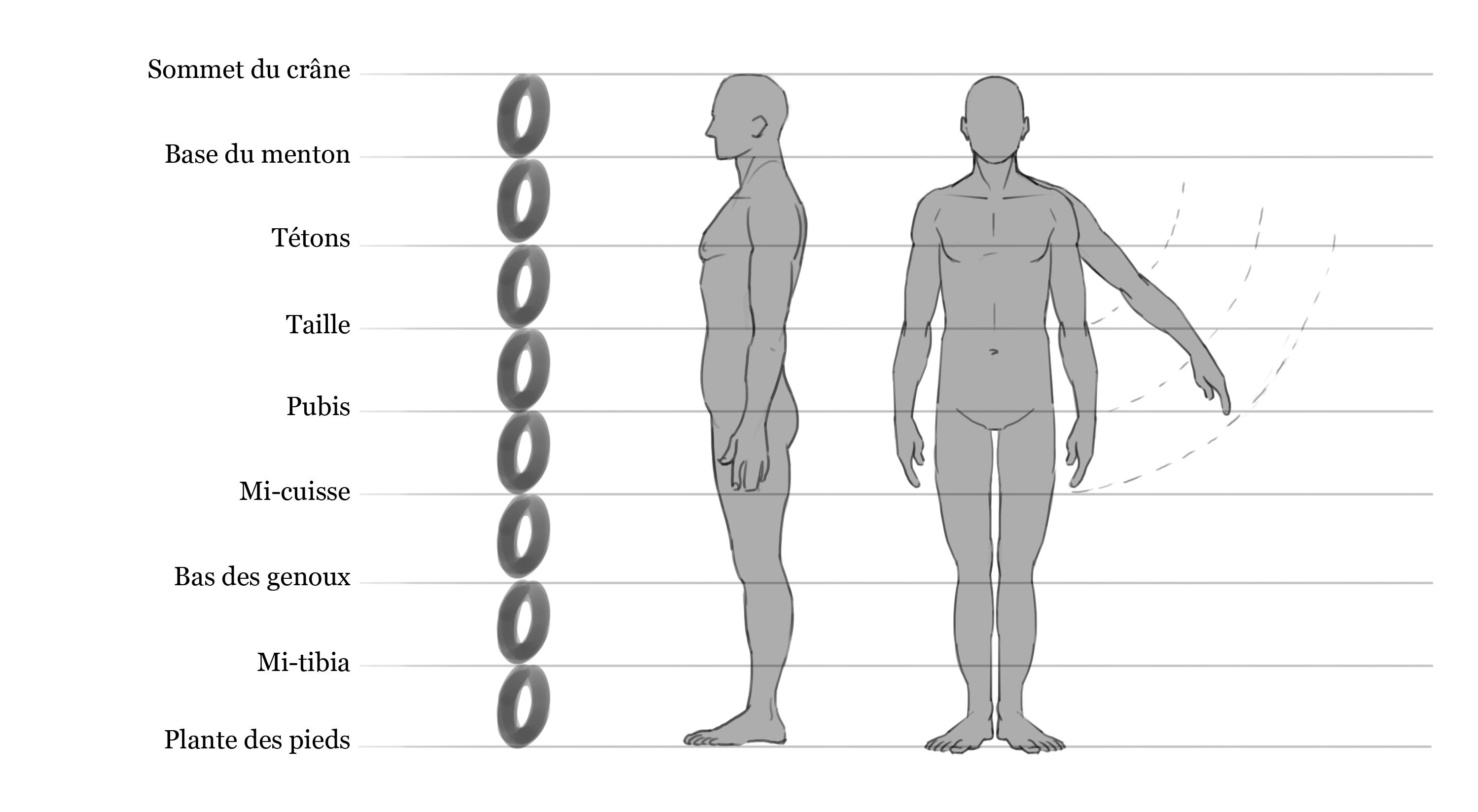 Atemberaubend Anatomie Des Shin Fotos - Anatomie Ideen - finotti.info