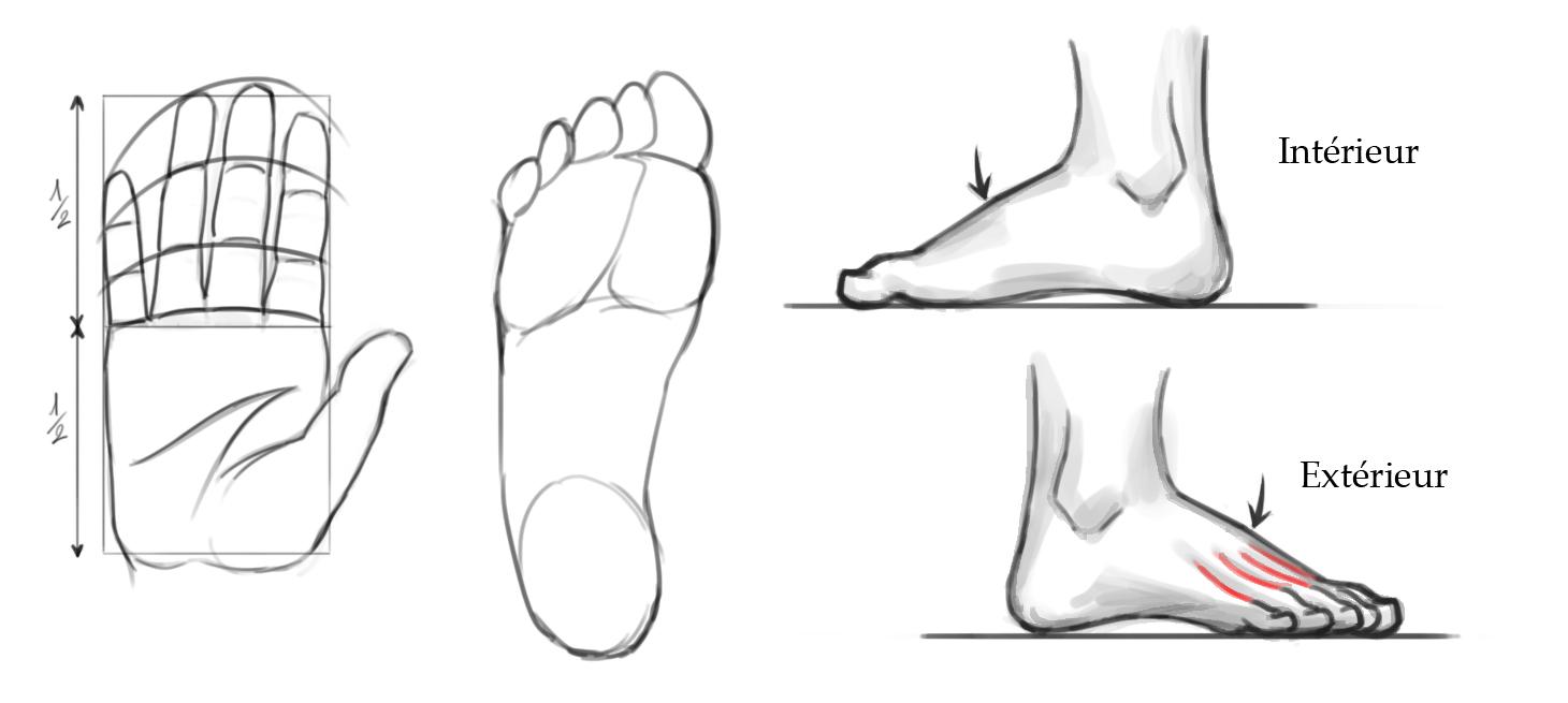 Dessin De Pied Humain les forges | Éléments d'anatomie